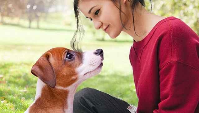 Обзор самых интересных и малоизвестных фактов про собак для детей
