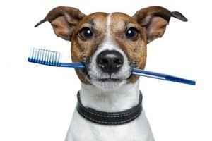 Почему могут появляться запахи рыбы или тухлятины у собаки из под хвоста