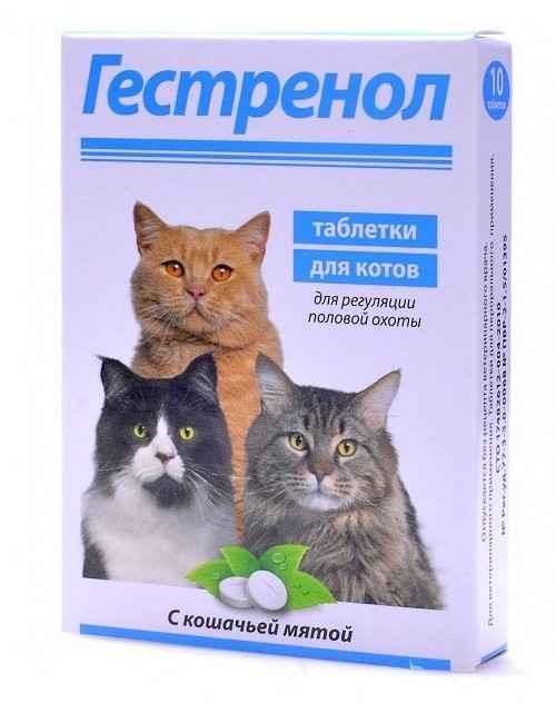 Способ применения капель и таблеток Гестренол для кошки: обзор инструкции