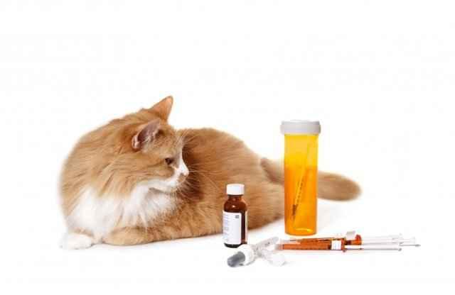 Почему кошки могут ничего не есть и постоянно отказываться от еды