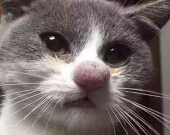 Список и способы применения антигистаминных препаратов для кошки против аллергии