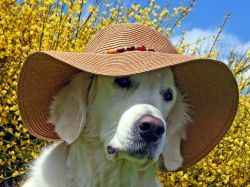 Как ведет себя щенок и взрослая собака в жару: правильное питание в такую погоду