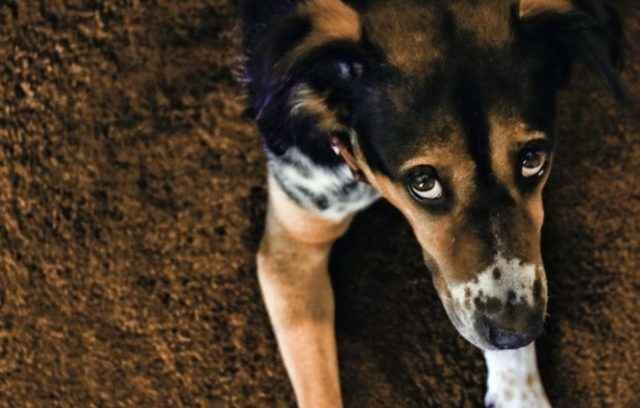 Виды отравлений у собак: обзор признаков интоксикации пищей и ядом
