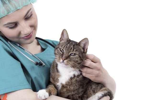 Особенности стерилизации кошек на ранних и поздних сроках беременности