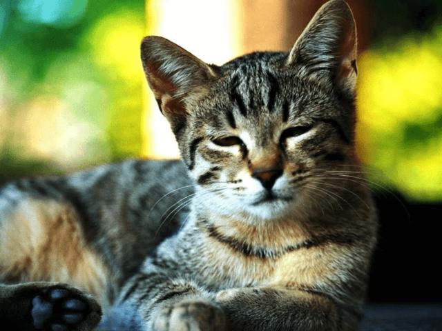 Почему кошку вырвало сухим кормом: описание возможных причин и что делать