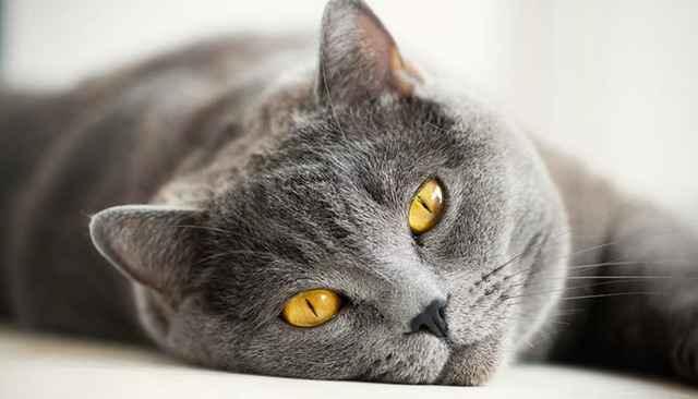 Налет коричневого и черного цвета и кошек с внутренней стороны: что это такое