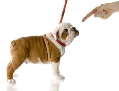 Правила дрессировки собаки дома: инструкция по тренировке даже дворняги