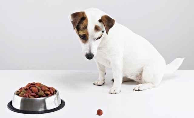 По каким причинам собаки перестают кушать, но при этом остаются активными
