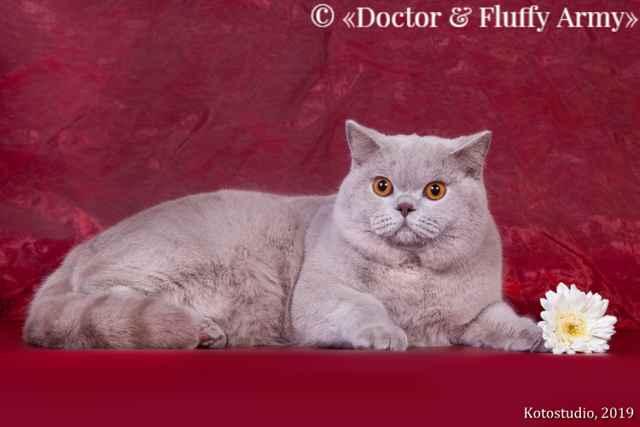 Варианты редких и красивых кличек для британских котов: примеры для серого цвета