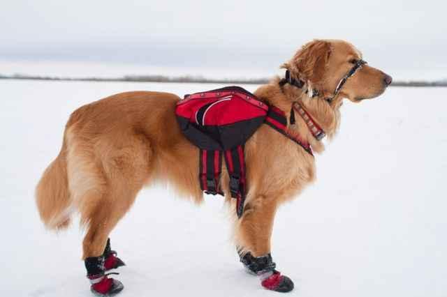 Какие бывают виды обуви для собаки: обзор ботинок для мелкой и крупной породы