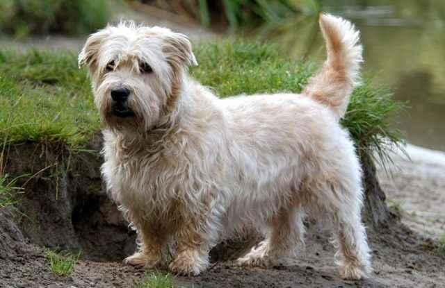 Обзор самых неприхотливых в уходе пород собак, которые подойдут ленивому хозяину
