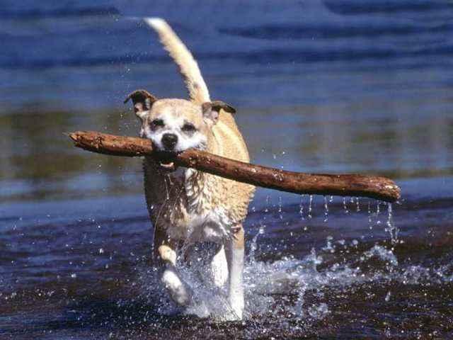 Влияющие факторы и средняя продолжительность жизни собак алабаев дома