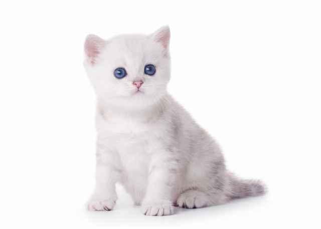 Обзор инструкции по использованию аверсектиновой мази для кошки от ушного клеща