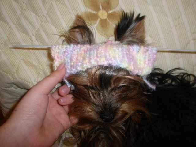 Как связать комбинезон для собаки породы мини йорк спицами для начинающих