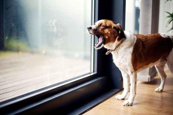 По каким причинам собака может выть ночью во дворе: что делать, как бороться