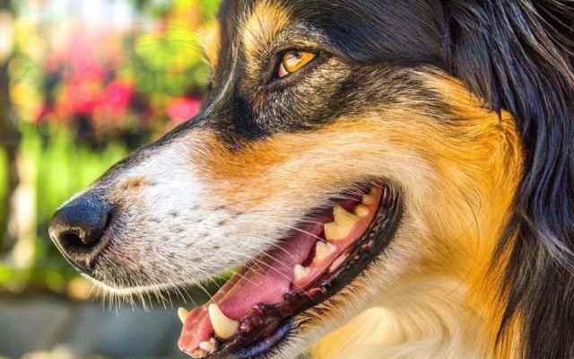 По каким причинам собаки иногда начинают пукать с неприятным запахом