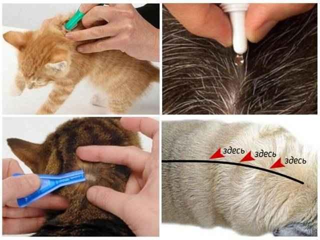 Обзор и способы применения капель на холку для котов против глистов и блох