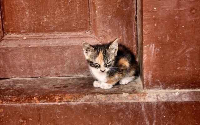 Кошки приходят в дома, популярные приметы: чужие, черные и другие примеры