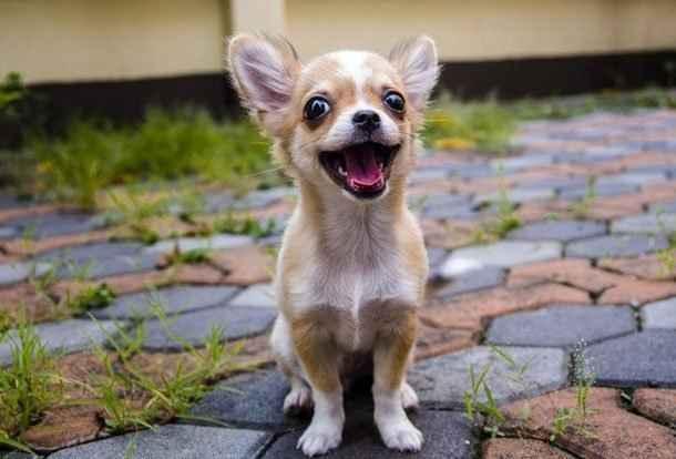 Какой кличкой назвать щенка мальчика или девочку маленькой породы