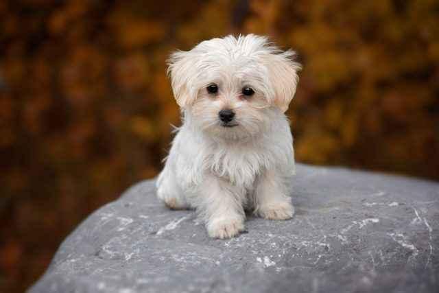 Какой кличкой лучше всего назвать собаку девочку: редкие и красивые имена