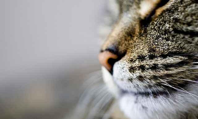 Причины мокрых и холодных носов у котов: что означает и когда надо волноваться