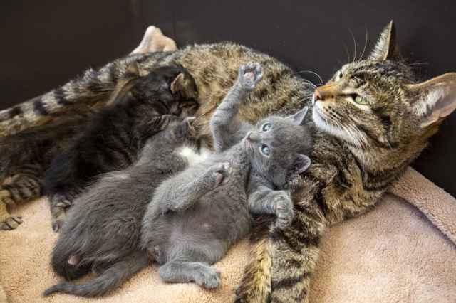 Помощь для кошки во время родов: что делать если не может родить сама