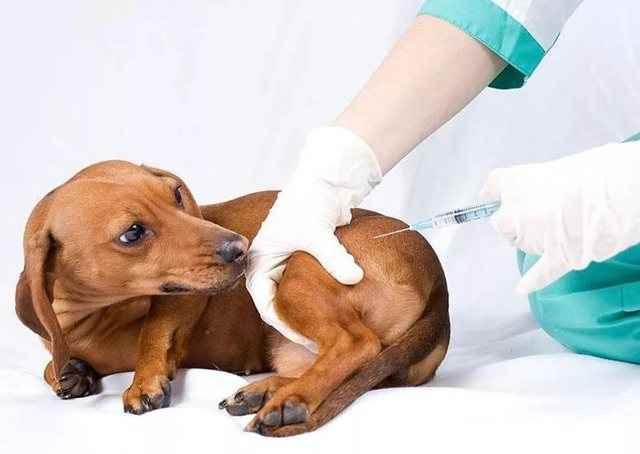 Как проявляется бешенство у человека, которого укусила больная собака