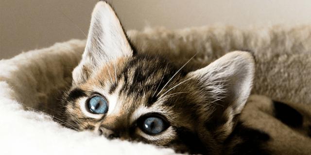 Причины почему котенок кусается и царапается, варианты как можно отучить