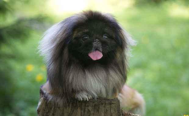 Обзор линейки собачьих кормов от фирмы Брит для мелкой и крупной породы