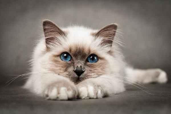 Как можно узнать о появлении глистов у котов: особенности симптоматики