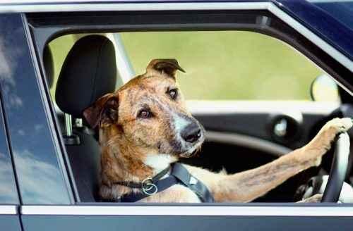 Какие справки и прочие документы нужны собаке, чтобы выехать за границу