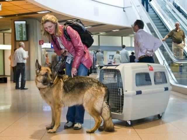 Как нужно правильно перевозить собаку самолетом по России и за границу