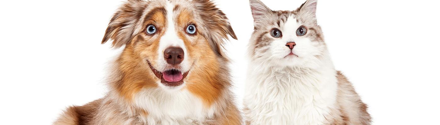 КотоПес – журнал о домашних животных