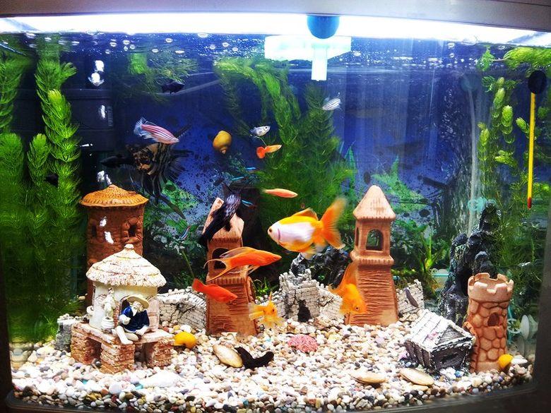 Виды рыбок для аквариума: фото и название