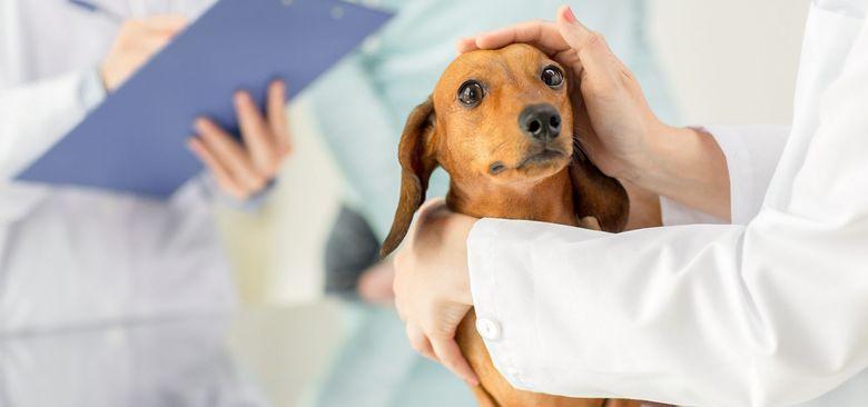 Жидкий стул у собаки с примесью крови