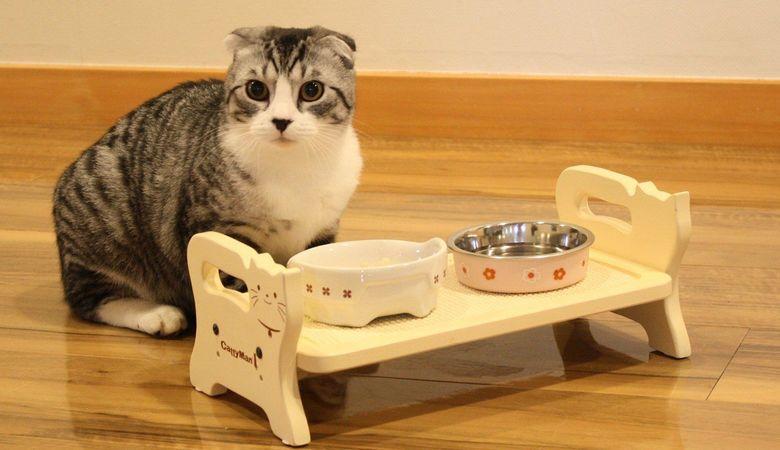 Почему кот ничего не ест: что делать