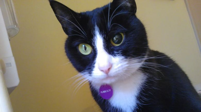 Почему у кота разные зрачки по размеру